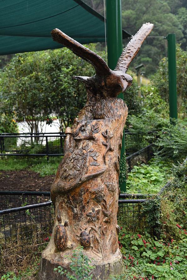 Joe的木雕作品「原生」,寄語眾人珍惜香港原生的樹木,表達自己對自然的敬畏之心。(嘉道理農場暨植物園網頁)