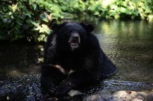 黑熊襲擊空手道高手被胖揍 認輸逃走