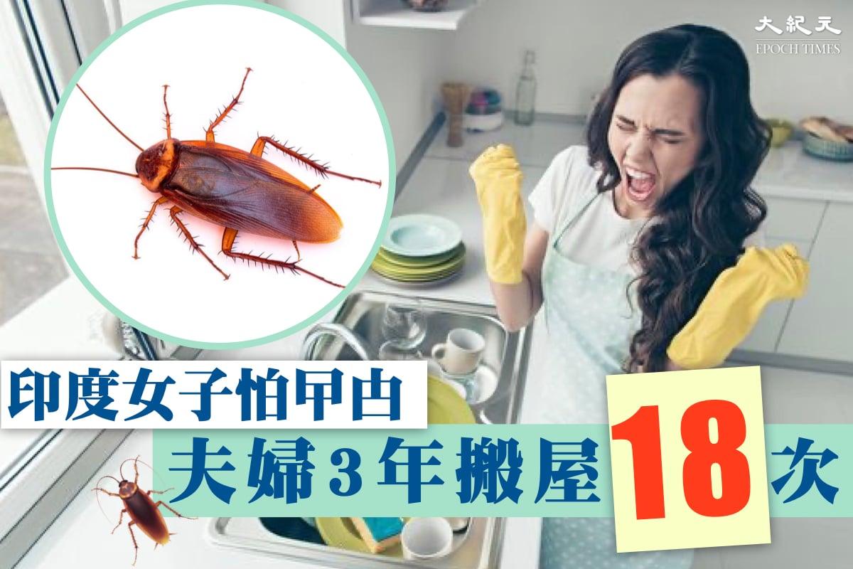 印度一名夫婦在3年內搬家18次,只因為妻子害怕蟑螂。(Shutterstock & 大紀元製圖)
