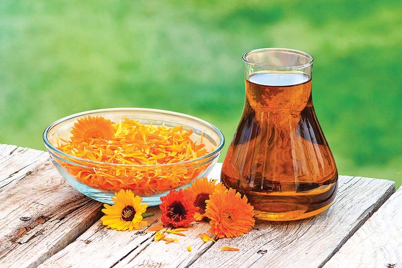 金盞花油能潤膚、淡化疤痕。