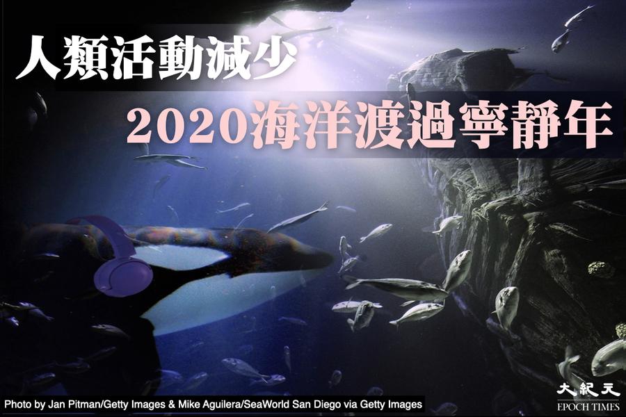 噪音研究發現:2020是海洋「安靜年」
