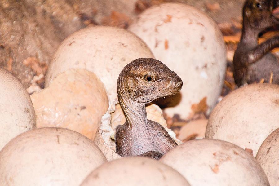 新發現超小恐龍腳印 其主人只有貓大小