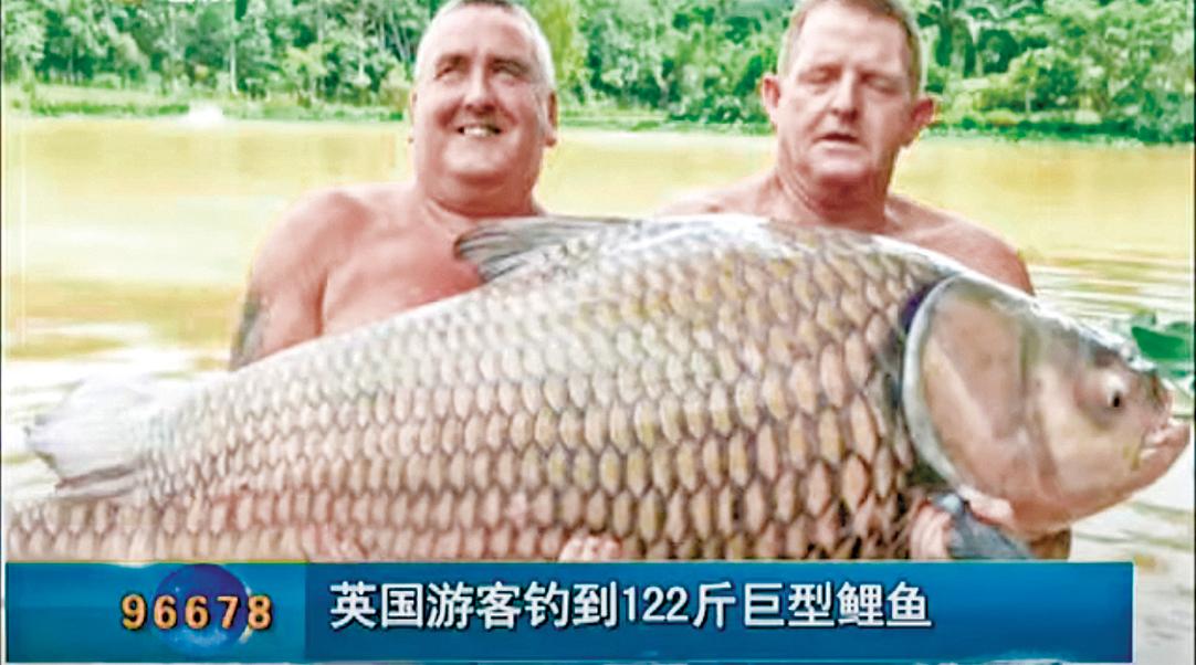 稀罕的巨暹羅鯉,只存在於泰國境內的湄公河河段。(影片截圖)