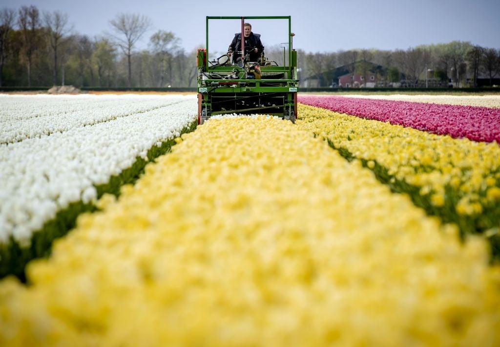 IHS Markit今(5月3日)公佈4月份荷蘭製造業PMI數值為67.2,反映商業活動正在擴張。(SEM VAN DER WAL/ANP/AFP via Getty Images)