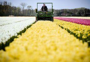 荷蘭 4月製造業如鬱金香花海般燦爛盛放 兩個月連創新峰