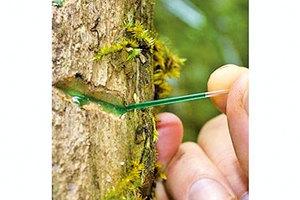 樹中採礦!罕有植物特性或改變礦業未來