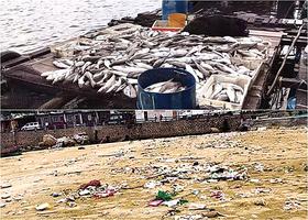 垃圾「圍攻」養殖場 100萬斤魚死亡