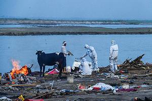 印度恆河染疫屍體被沖上岸 疑火葬場不堪重負