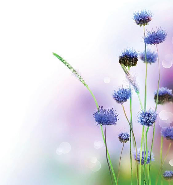 八種美麗花卉  適合種在菜園