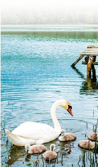 【浮生行吟】湖畔沉思