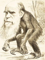 炮製進化論 達爾文怪病纏身 (上)