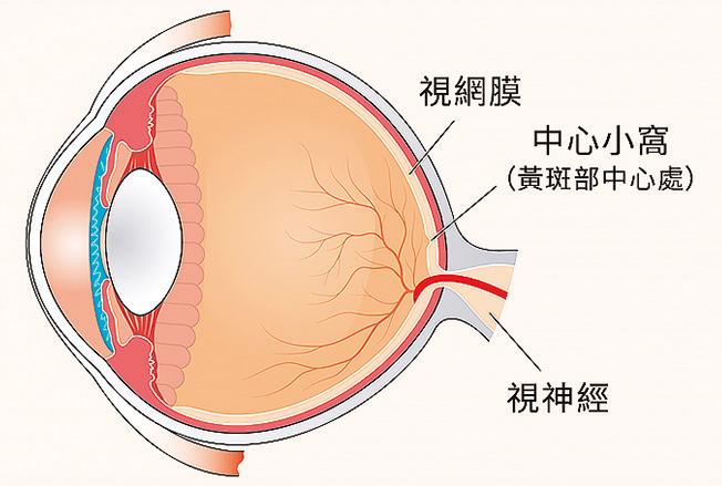 實驗證明,人眼睛的瞳孔有如照相機快門,無論在陽光照耀下或在黑夜裏,都能讓足量的光線進入眼球,水晶體表面能自動改變光密度、調整色差等。(Shutterstock/大紀元製圖)