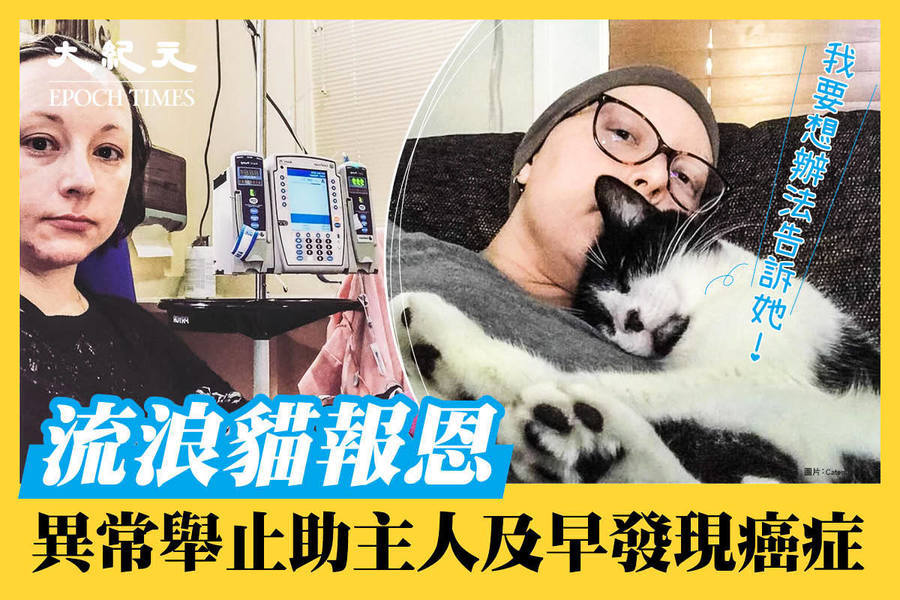 流浪貓報恩 異常舉止助主人及早發現癌症