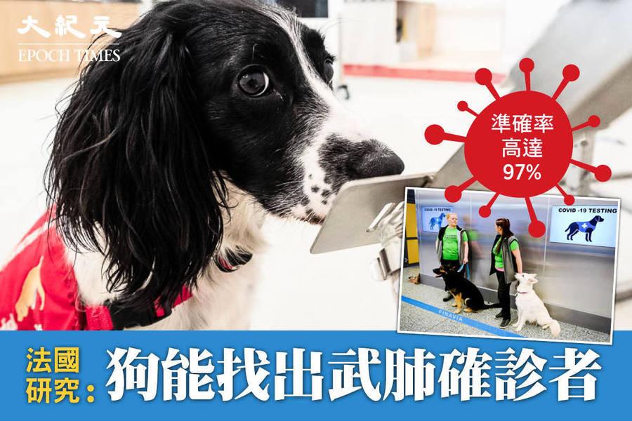 準確率高達97% 法國研究:狗能找出武肺確診者【影片】