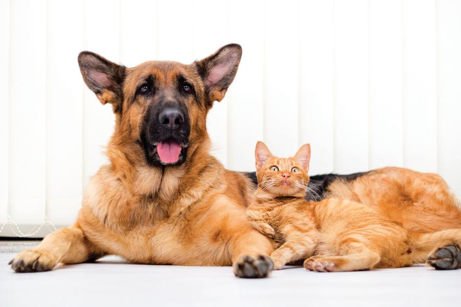 貓狗如何共養?對貓咪友好的九種狗