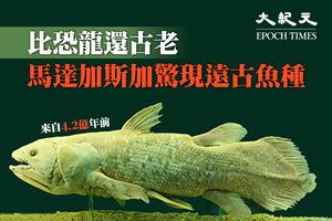 比恐龍還古老 馬達加斯加驚現遠古魚種
