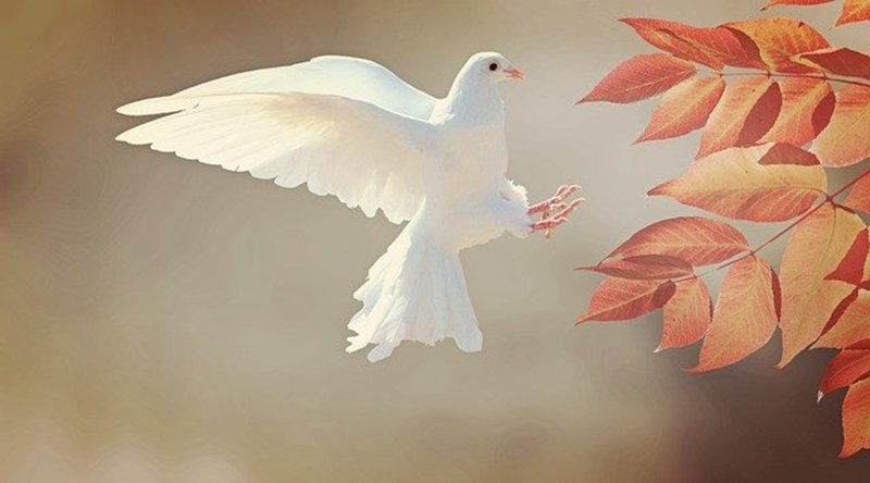 金正恩認為來自中國的鳥類是傳播中共病毒的罪魁禍首,下令邊境官員「見鴿即殺」。(pixabay)
