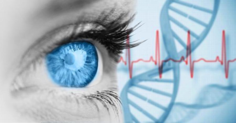 基因蛋白技術助失明者重見光明