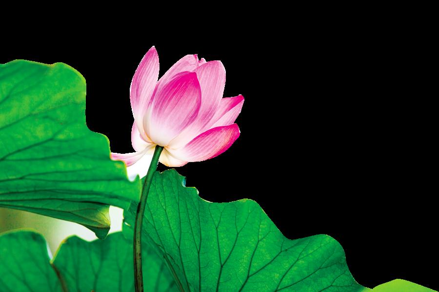 花瓣的力量