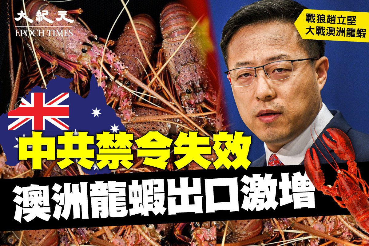 因中共貿易報復被拒之門外的澳洲龍蝦似乎正在通過非官方的「灰色渠道」在中國走俏。(Getty Images,大紀元製圖)