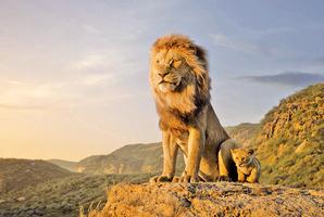 從《獅子王》經典台詞 看天選之王的成長