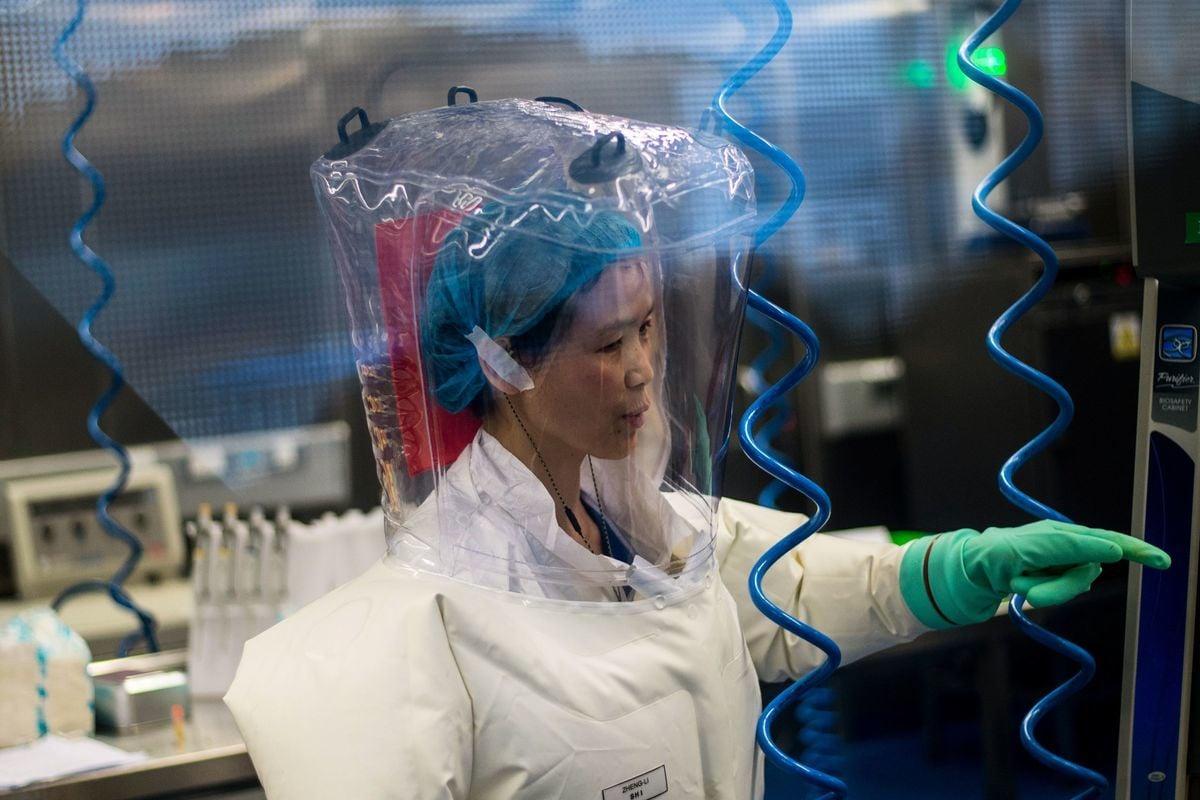 中共央視2017年12月29日發佈的視頻顯示,武漢病毒研究所石正麗研究團隊成員曾在沒有防護措施的情況下接觸蝙蝠,並被咬傷。中共病毒爆發後,該視頻被刪除,但近期被外媒再度曝光。圖爲武漢病毒所新發傳染病研究中心主任石正麗。(JOHANNES EISELE/AFP via Getty Images)