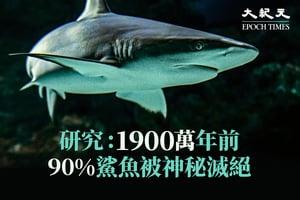研究:1900萬年前90%鯊魚被神秘滅絕