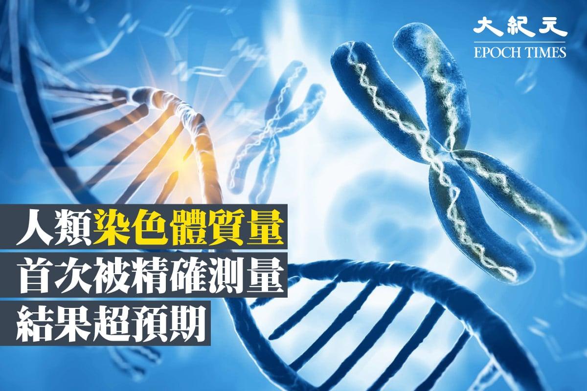 染色體示意圖。(ShutterStock)