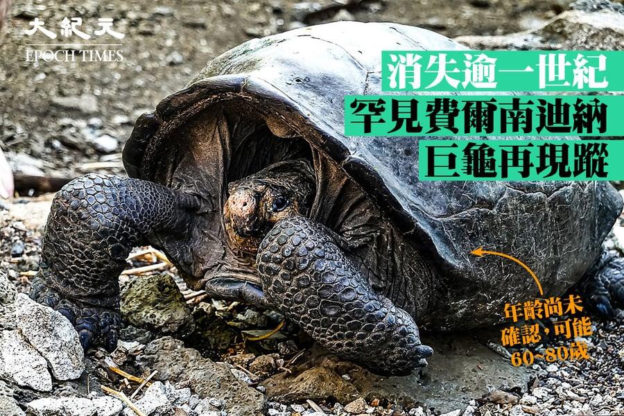 消失逾一世紀 罕見費爾南迪納巨龜再現蹤