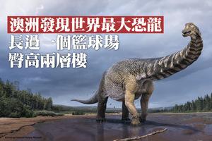 澳發現世界最大恐龍 長過籃球場臀高兩層樓