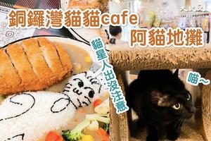 快點來和喵星人玩啦!銅鑼灣貓貓咖啡店-「阿貓地攤」