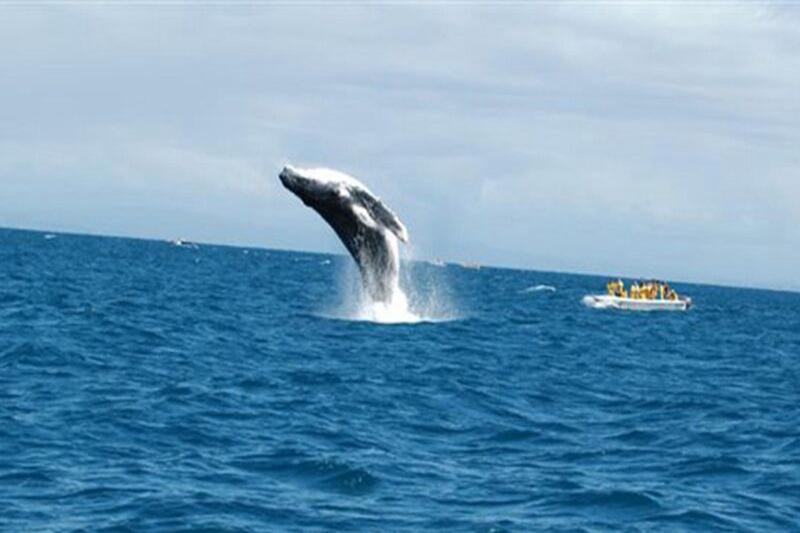 不好吃?美國漁夫被鯨魚吞入口又吐出 撿回一命