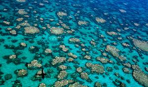 澳洲抗議將大堡礁列為瀕危 疑中共背後搞鬼