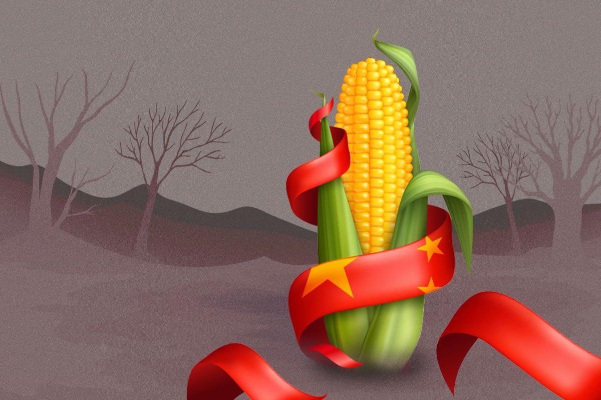 中國今年穀物進口,同比增長近2倍?中共高喊「玉米去庫存」,進口量卻漲幅驚人?中國的產糧大縣,為何多是貧窮縣?(大紀元製圖)