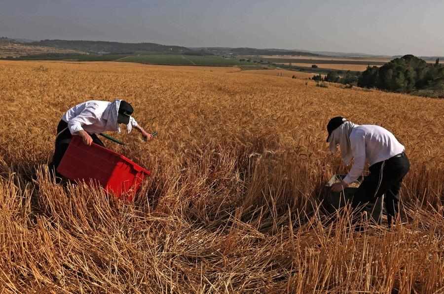 全球糧價上漲40% 中國糧食需求推高國際糧價