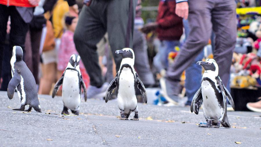《企鵝小鎮》拍攝企鵝的紀錄片 也能很有故事性