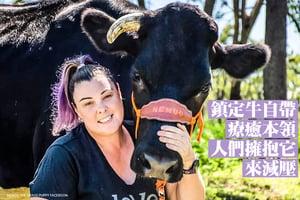 鎮定牛自帶療癒本領 人們擁抱它來減壓