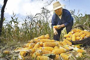 【財商天下】大量糧食靠進口 中國耕地卻拋荒?