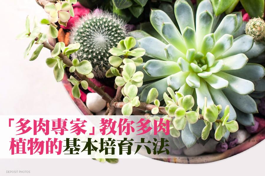 打造家居園藝天地 多肉植物基本培育6法