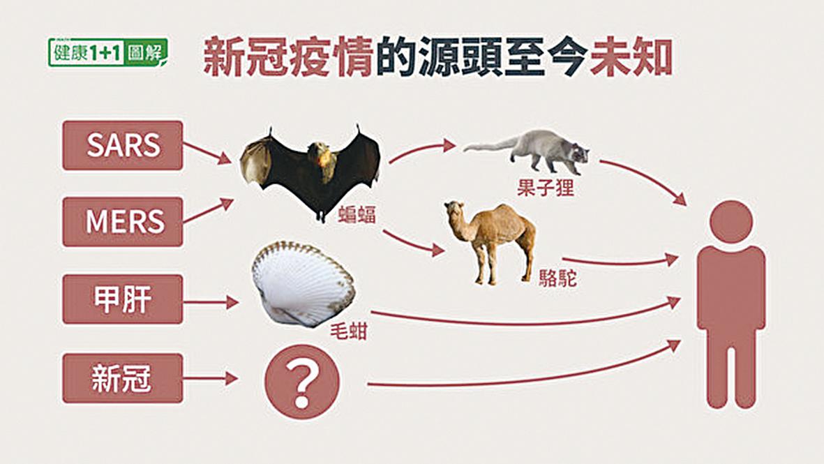 關於中共病毒自然來源的可能性,目前無法確認病毒來自蝙蝠,也找不到中間宿主。(健康1+1/大紀元)