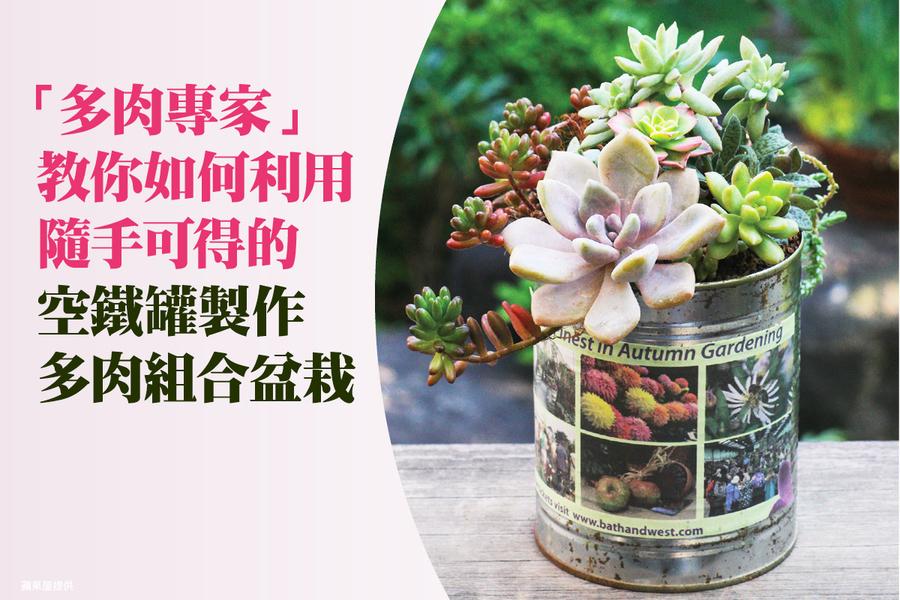 空鐵罐廢物利用 有趣的多肉組合盆栽