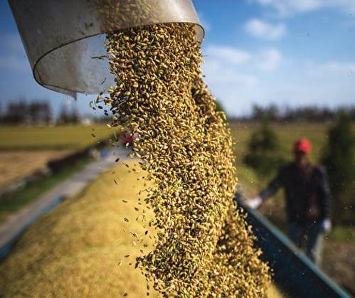國際糧價飆升 專家:中共大肆搶購助漲勢
