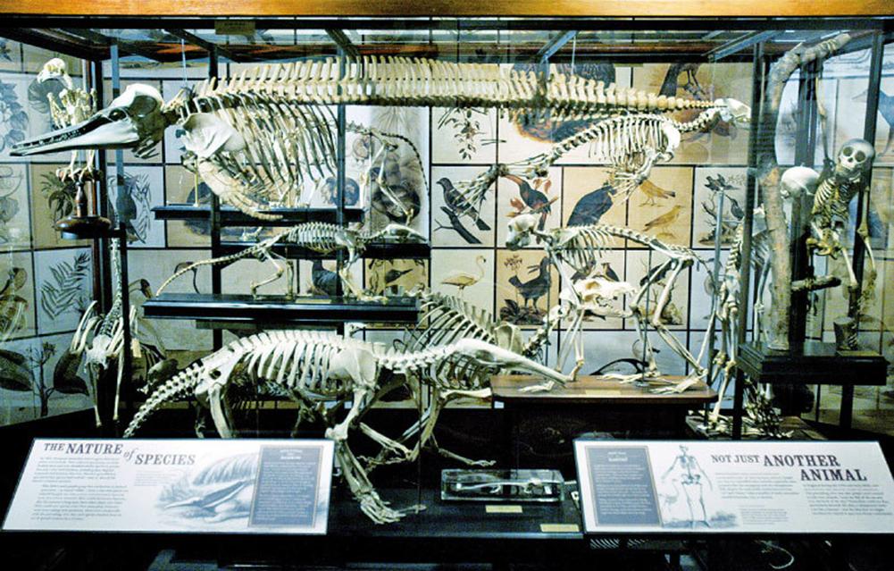達爾文的進化論「假說」漏洞百出,卻給馬克思提供了一個貌似「科學」的依據。(AFP)