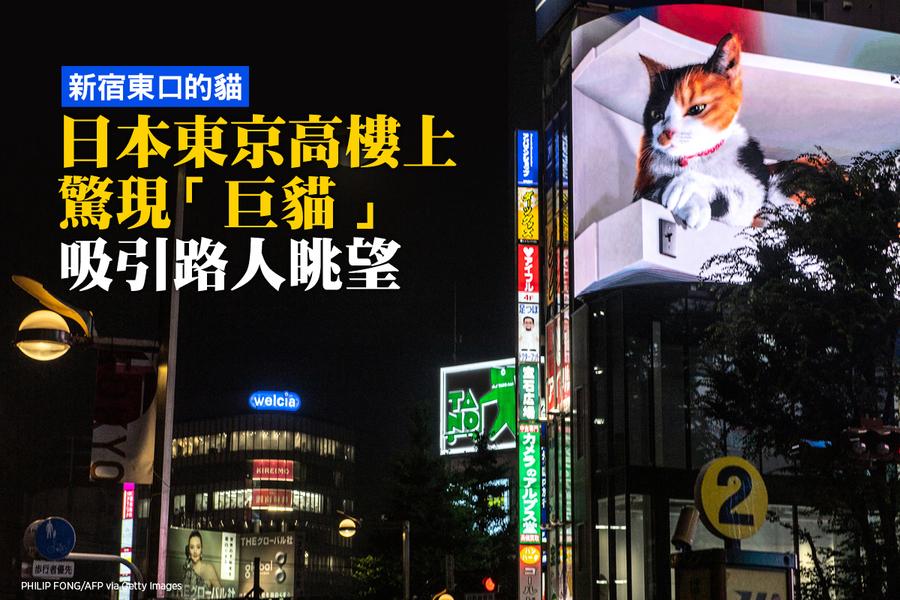 新宿高樓上驚現「巨貓」 吸引路人眺望〔有影片〕