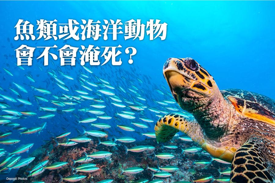 魚類或海洋動物也有「淹死」問題?