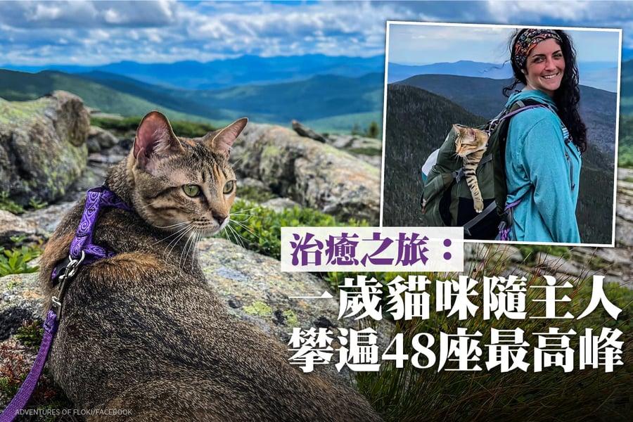 治癒之旅:一歲貓咪隨主人攀遍48座最高峰