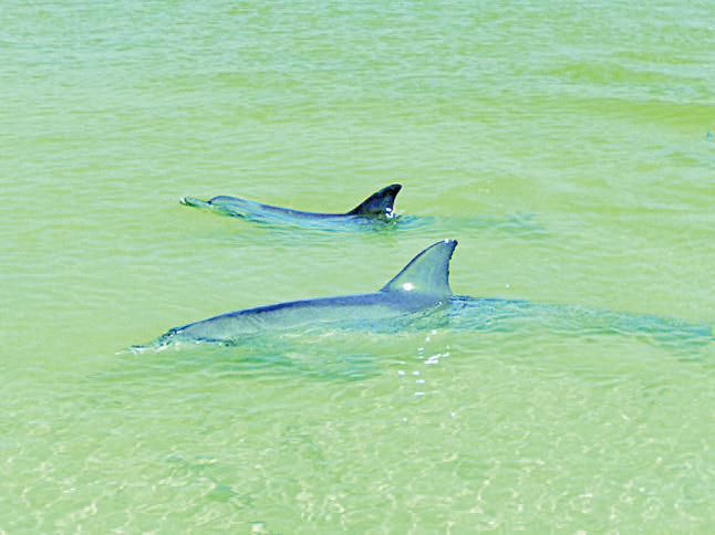 為海豚語言解碼科學家首錄交談