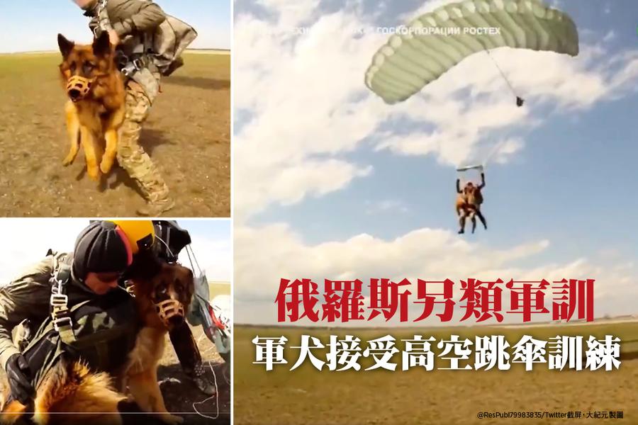 俄羅斯另類軍訓:軍犬接受高空跳傘訓練