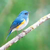 鳥類翅膀幻彩藍色調  啟發光子晶體工藝