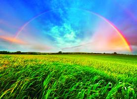 【青松絮語】 頭頂的彩虹 腳下的水坑